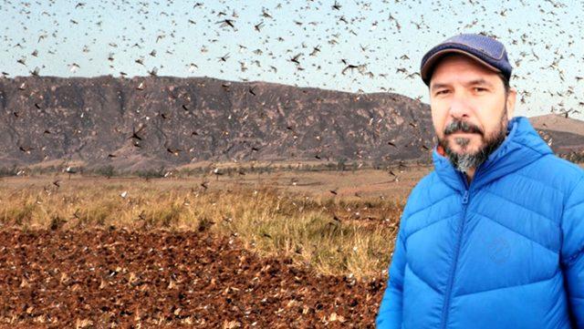 Prof. Dr. Hasan Sevgili: Türkiye'de Daha Önce Görmediğimiz Böcek Türleri Göreceğiz, Başımıza İş Açacak
